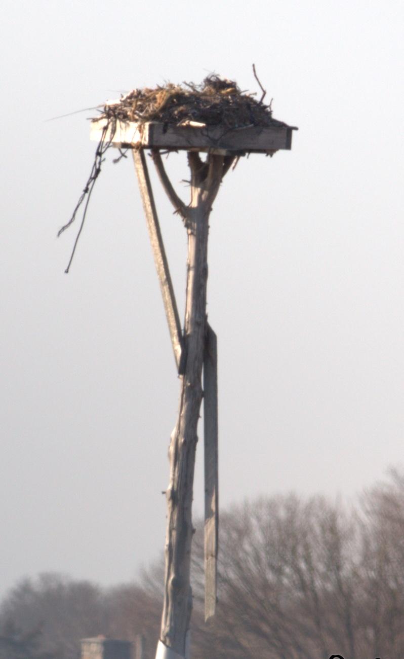 winnapaug nest photo_2016